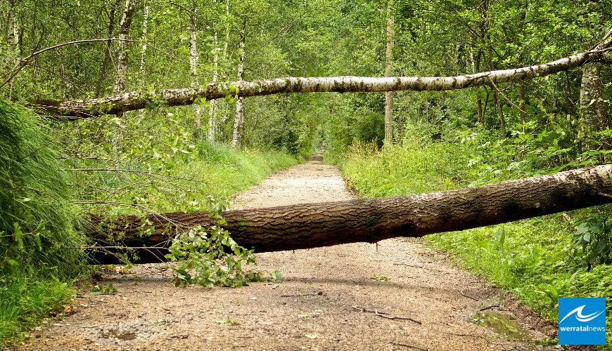 HessenForst warnt: Wälder auch nach dem Sturm nicht betreten!