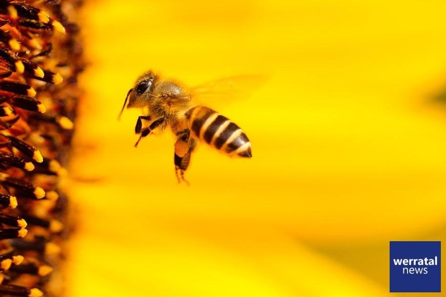 Bienenvölker gestohlen